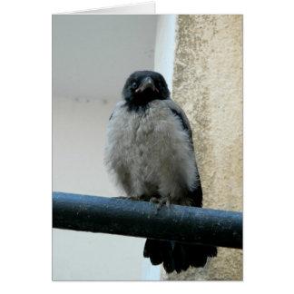 Baby crow card