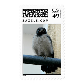 Baby crow postage