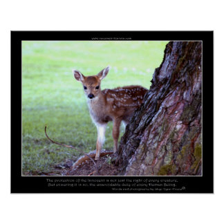 Baby Deer Fawn Photo & Poem Poster