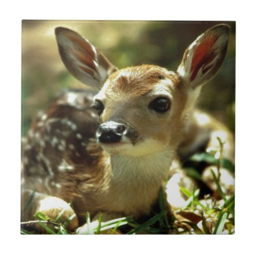 Baby Deer gifts Ceramic Tile