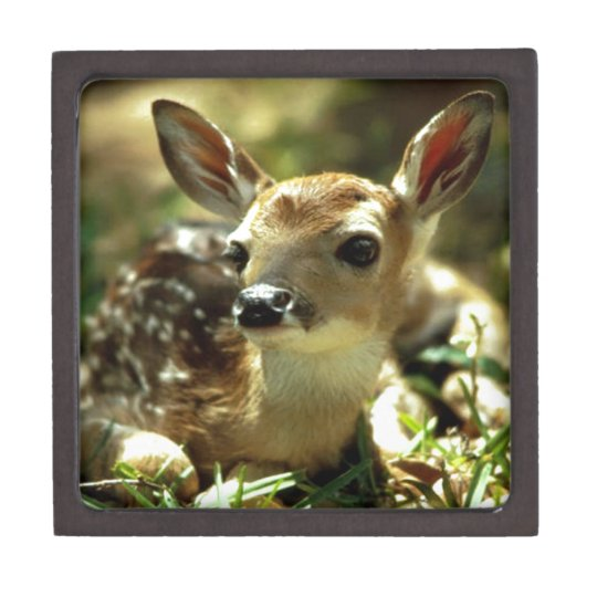 Baby Deer gifts Gift Box
