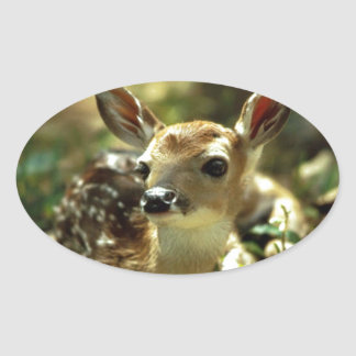 Baby Deer gifts Oval Sticker