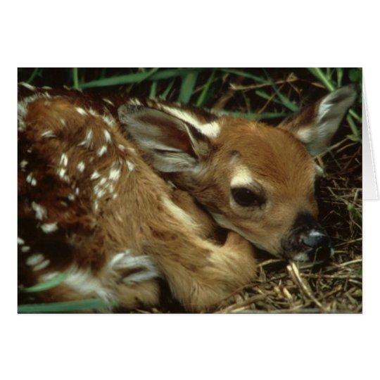 Baby Deer Greeting Card
