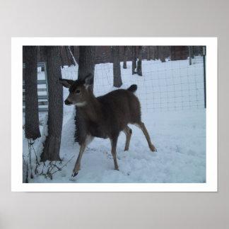 Baby Deer in the Snow Art Print Poster
