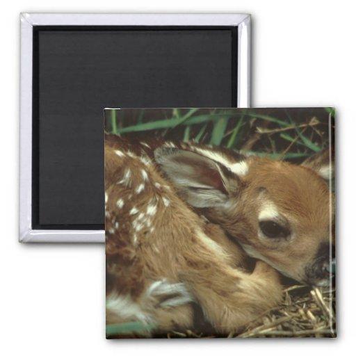 Baby Deer Magnet