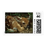 Baby Deer  Postage Stamp