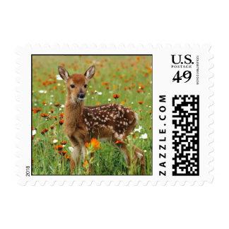 Baby Deer Postage Stamps
