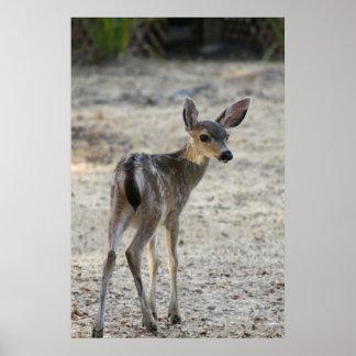 """""""Baby"""", Deer Poster"""