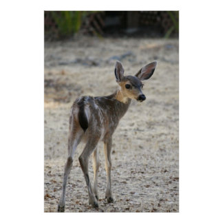 """""""Baby"""", Deer Posters"""