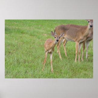 Baby Deer - Posters
