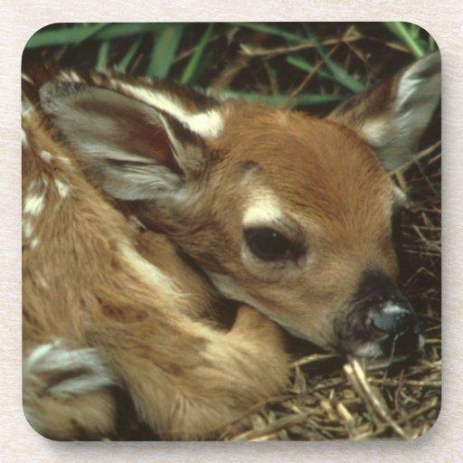 Baby Deer Set of Six Coasters