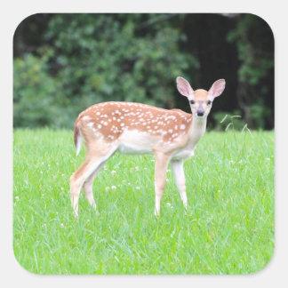Baby Deer Square Sticker