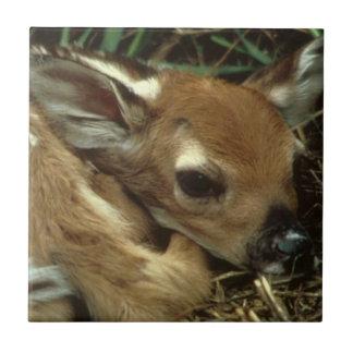 Baby Deer Tile