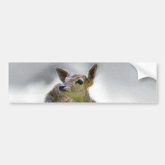 Baby deer's curiosity car bumper sticker