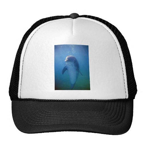Baby dolphin, La Havana Aquarium, Cuba Mesh Hat