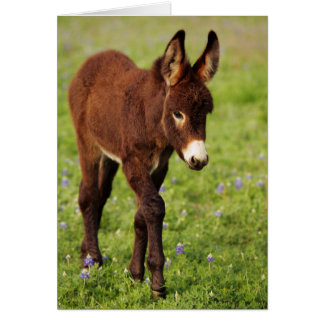 Baby Donkey in the Blue Bonnets Greeting Card