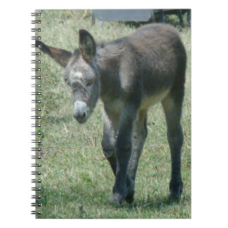 Baby Donkey Notebook