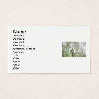 Baby duck business card