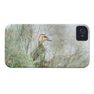 Baby duck blackberry case