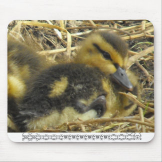 Baby Duck closeup Mouse Pad