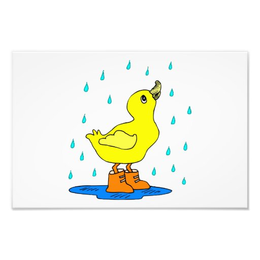 Baby duck photograph