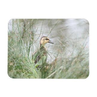 Baby duck rectangular photo magnet