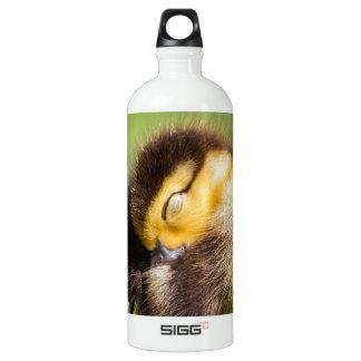 baby duck sleeping aluminum water bottle
