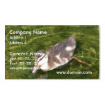Baby Duck Swimming Business Cards