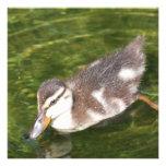 Baby Duck Swimming Invitations