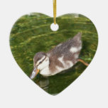 Baby Duck Swimming Ornament