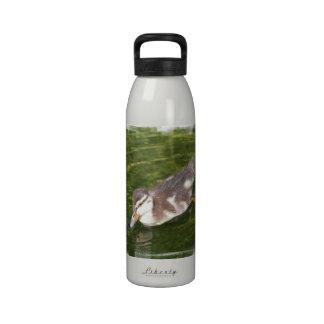 Baby Duck Swimming Water Bottle