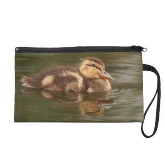 Baby Duckling Duck Bird Wildlife Animals Bag