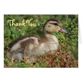 Baby Duckling, Thank You Card