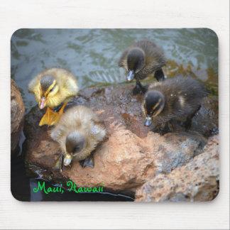 Baby Ducklings at Maui Hawaii Lagoon Mouse Pad