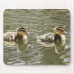 Baby Ducklings Mouse Pad