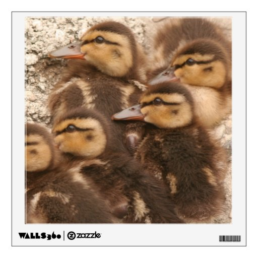 Baby Ducks Ducklings Wall Decal