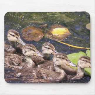 Baby ducks. mouse pad
