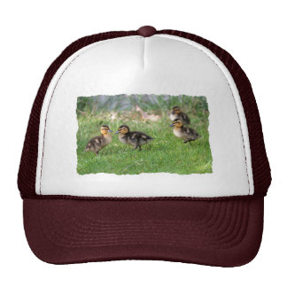 Baby Ducks Photo Trucker Hat