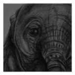 Baby Elephant5 Print