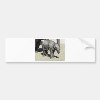 baby elephant 2 bumper sticker