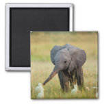 Baby Elephant and Birds 2 Inch Square Magnet