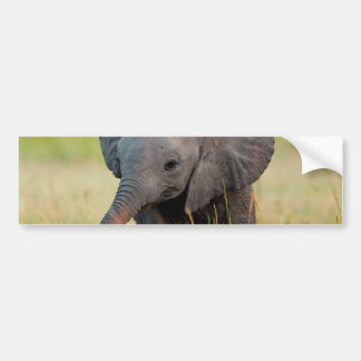 Baby Elephant and Birds Bumper Sticker