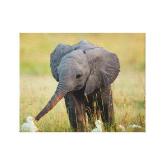 Baby Elephant and Birds Canvas Print