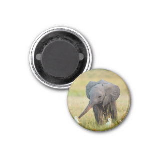 Baby Elephant and Birds Magnet