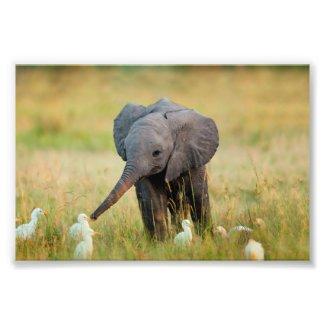 Baby Elephant and Birds Photo Print
