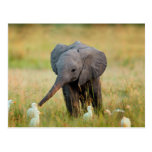 Baby Elephant and Birds Postcard