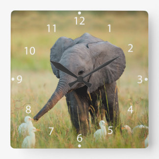 Baby Elephant and Birds Square Wall Clock