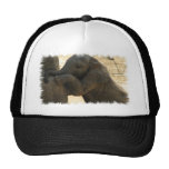 Baby Elephant Baseball Hat