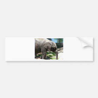 baby elephant by water bumper sticker