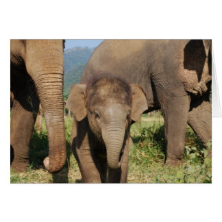 Baby Elephant Cards